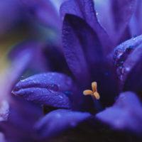 Water-Violet